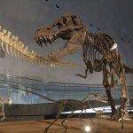あなたも恐竜博士になれる!?発掘体験もできる福井県立恐竜博物館をご紹介