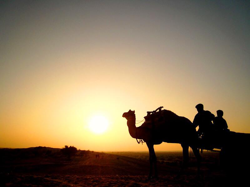 ラクダと砂漠