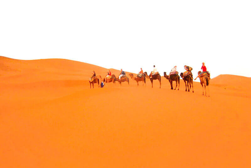 ラクダに乗って砂漠を歩く