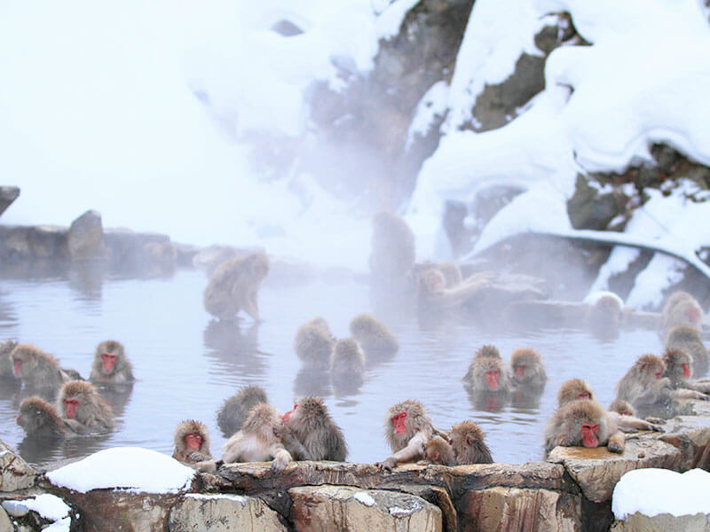 地獄谷野猿公苑の画像