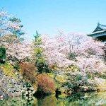"""""""金魚とお城の町""""奈良県・大和郡山市 インスタ映えする観光スポットを巡ろう!"""