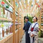 約二千個の風鈴が小江戸川越の夏を彩る、川越氷川神社 縁むすび風鈴が今年も開催!