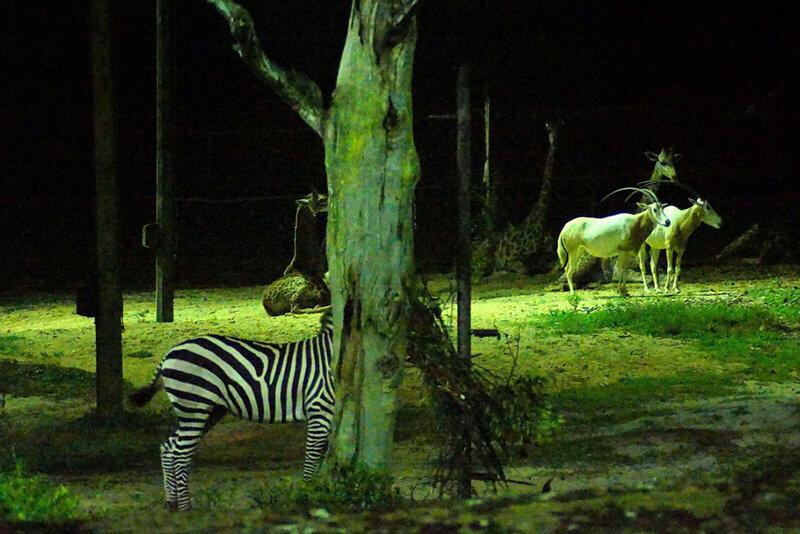 ナイトサファリで見られる動物たち
