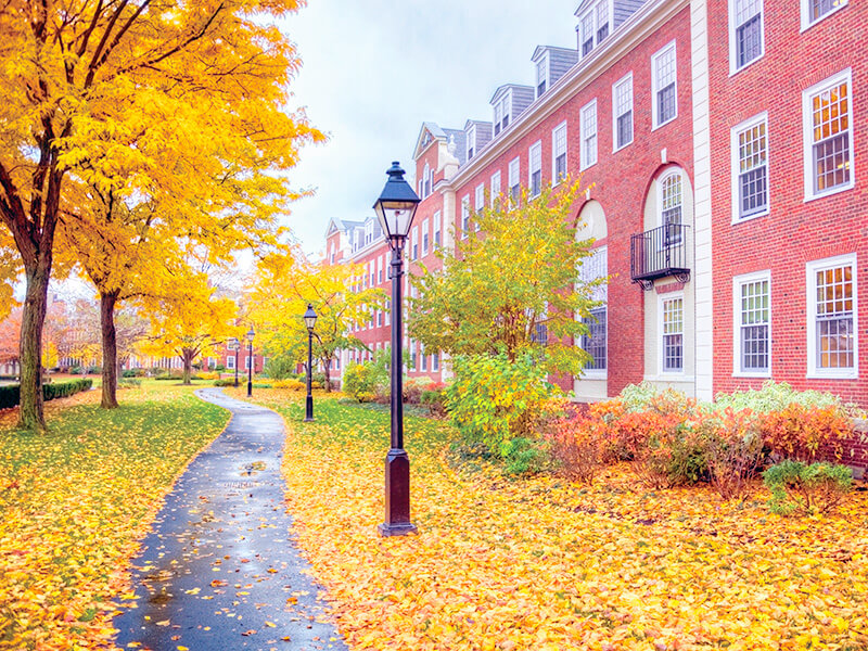ハーバード大学の構内
