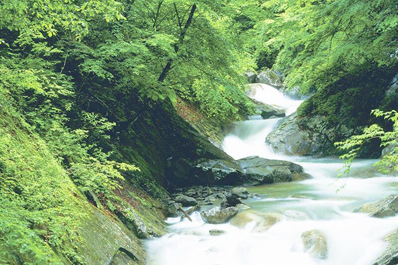 日帰りハイキングで森林セラピー♪5段に流れるエメラルドの滝に出会える西沢渓谷