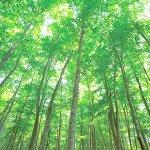 スラリとまっすぐに伸びるブナの木に感動♡香りにも癒される「美人林」