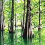 ココはどこの国!?日本とは思えない光景が目の前に広がる「篠栗九大の森」へ行ってみよう!