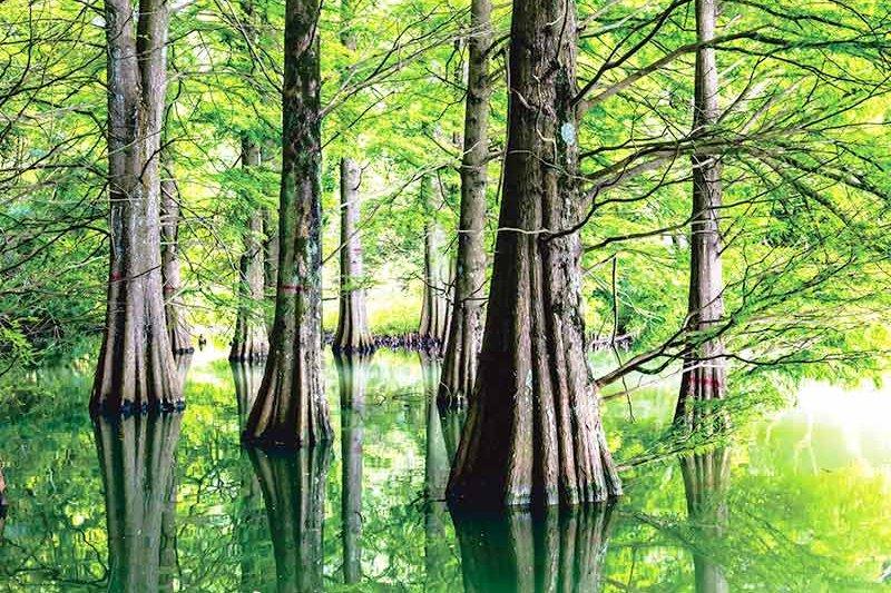 日本とは思えない光景が目の前に広がる♪福岡県の「篠栗九大の森」へ行ってみよう!