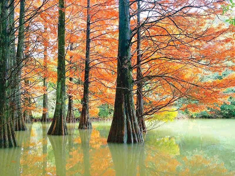 篠栗九大の森 紅葉
