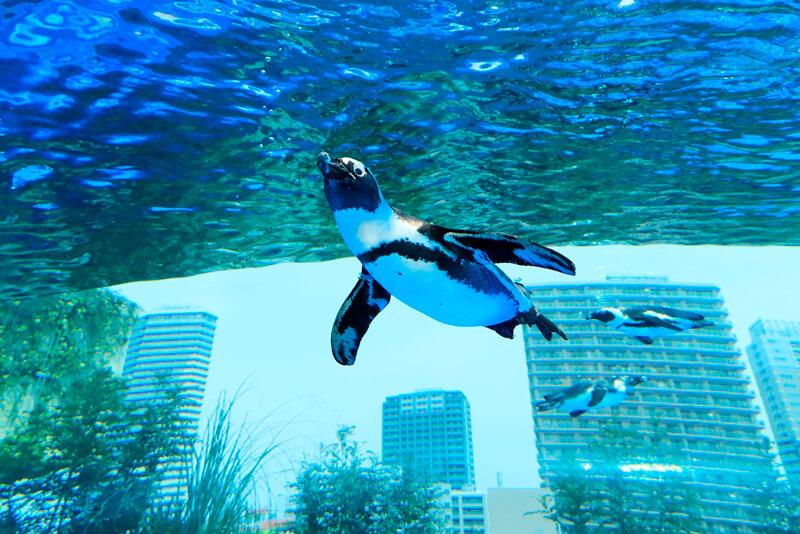 天空のペンギン 写真提供:PRTIMES