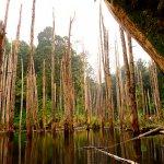 日本ではまだあまり知られていない台湾の秘境!南投地区の「忘憂森林」の景色がスゴイ!