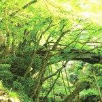 北陸随一の渓谷美を誇る名湯・山中温泉の名所「こおろぎ橋」をご紹介!