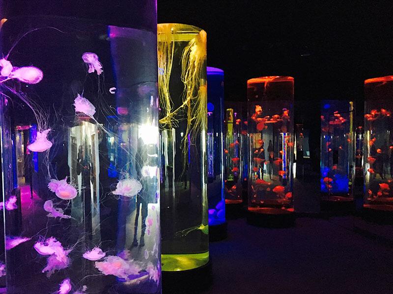 クラゲの光アート