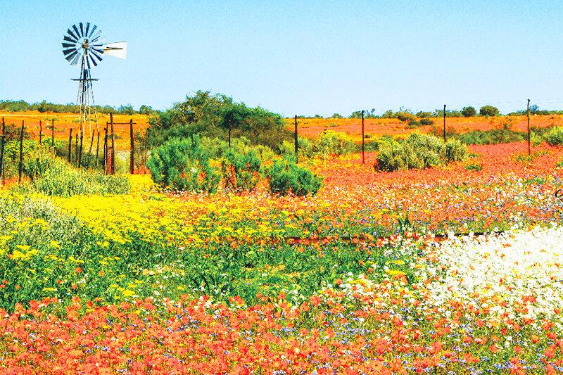 1年に1度だけ砂漠に花が咲く!南アフリカの神秘の花畑「ナマクワランド」
