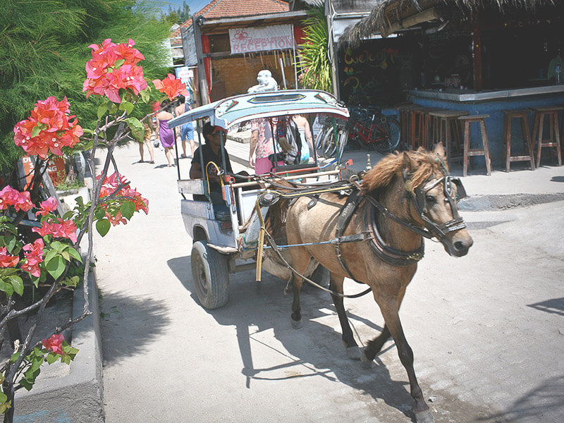 ギリ島の馬車