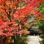 今年の紅葉狩りは奈良がオススメ!絵になる風景の「室生寺」へ