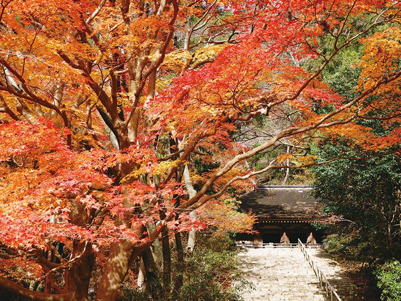 秋の室生寺