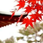 樹齢600年を超える御神木も!北茨城市の花園神社の見どころをご紹介