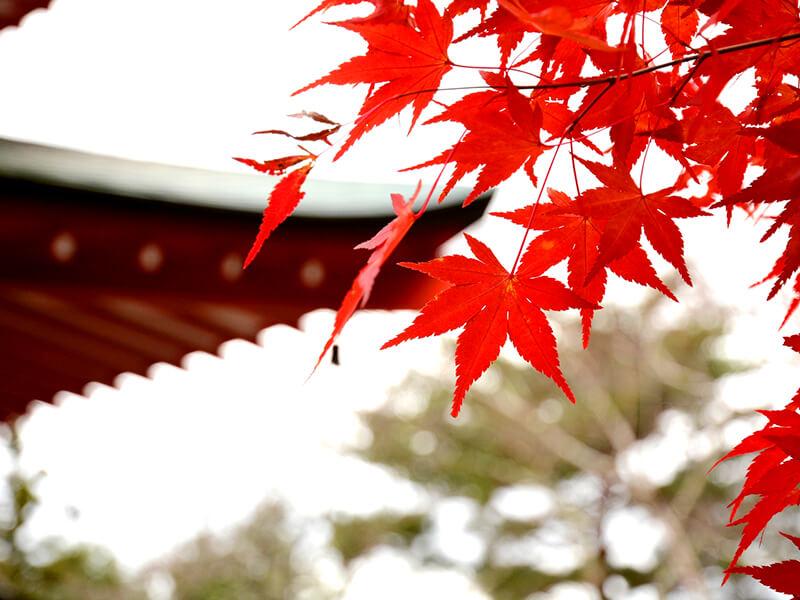 紅葉が美しい神社のイメージ