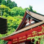 パワースポット好き必見!奈良の神社巡りで運気アップしちゃいませんか?