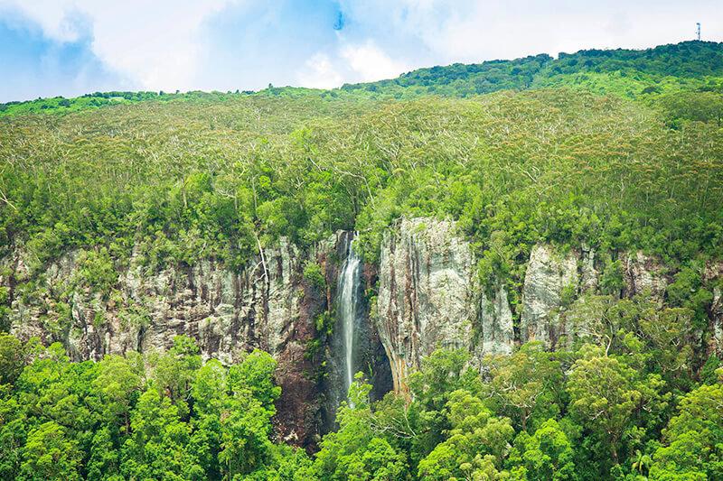 オーストラリアにある「スプリングブルック国立公園」で世界遺産の多雨林を体験!