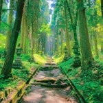 神秘の森で神聖な気持ちを体感!熊本県のパワースポットめぐりならココ!