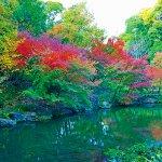 オトナが楽しめる紅葉スポットはココ♡ 名古屋のオアシス「徳川園」