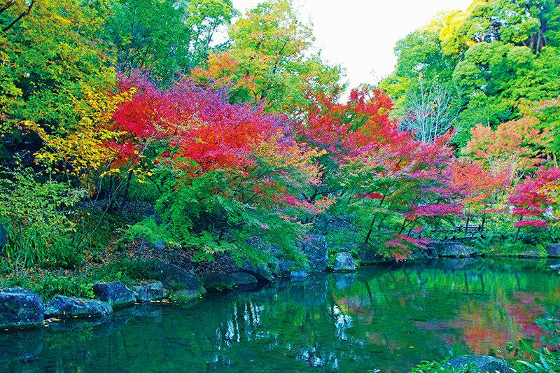 名古屋のオアシス「徳川園」愛知県の紅葉スポットはここへ行こう♪