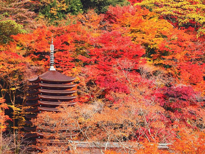 談山神社 十三重塔 紅葉