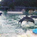 東京から日帰り旅行もOK!静岡県下田の「下田海中水族館」でイルカと遊ぼう♪