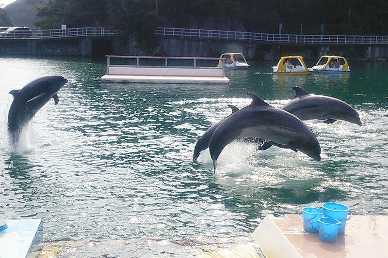 子連れOKで東京から日帰りできる!静岡県下田の「下田海中水族館」でイルカと遊ぼう♪