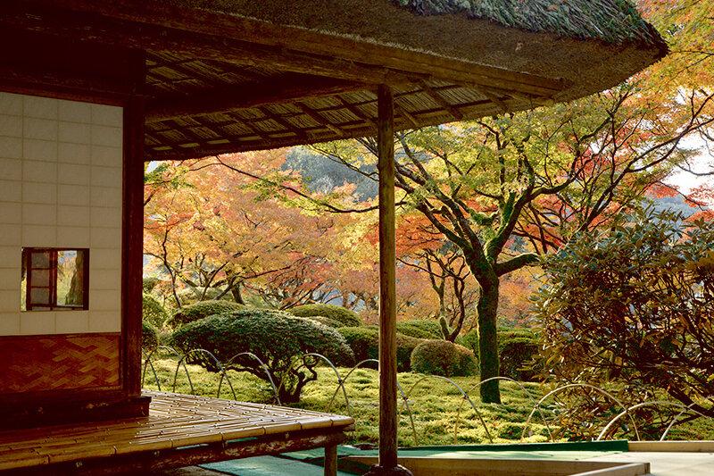 期間限定の美しさ!佐賀県の紅葉スポット「九年庵」で日本の美を味わう