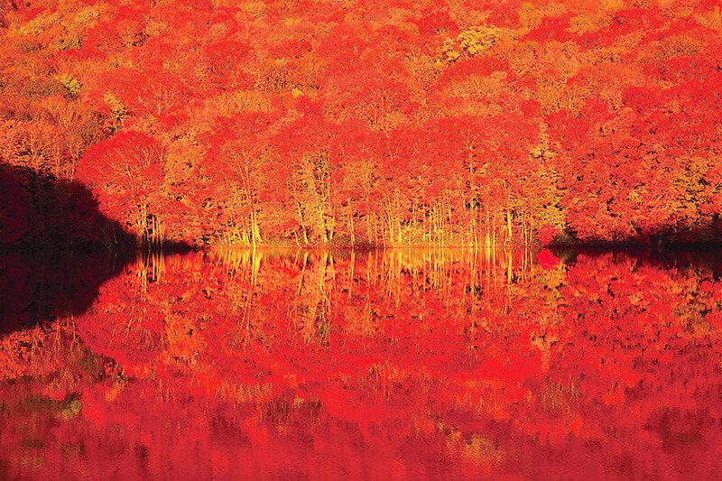 水面に映る燃えるような紅葉が美しい!青森の秘境「蔦沼」周辺で温泉と散策を楽しもう♪
