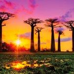 1度は見たい絶景!!バオバブの並木道が美しい「マダガスカル島」観光はいかがですか?