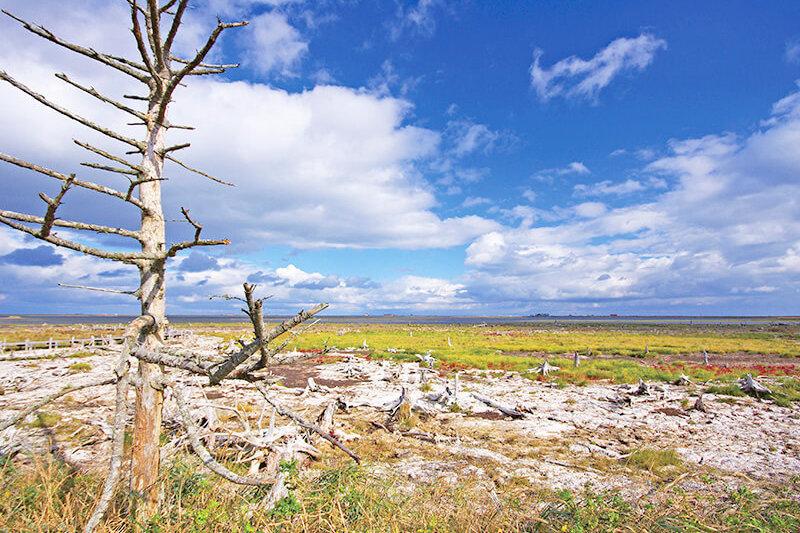 北海道・野付半島のトドワラの絶景と名湯を満喫する道東旅行はいかが?