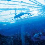 フォトジェニックな魚がいっぱい♡ シンガポールの巨大水族館「シーアクアリウム」がすごい!