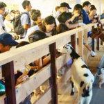 都心で酪農体験?!動物たちとのふれあいも楽しい大手町牧場のご紹介