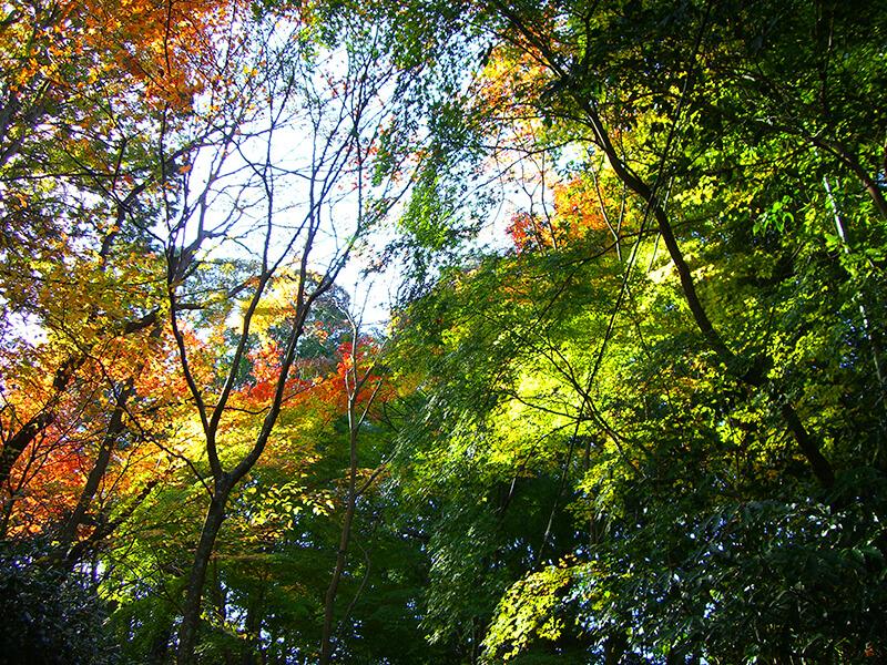 ポンポン山の自然