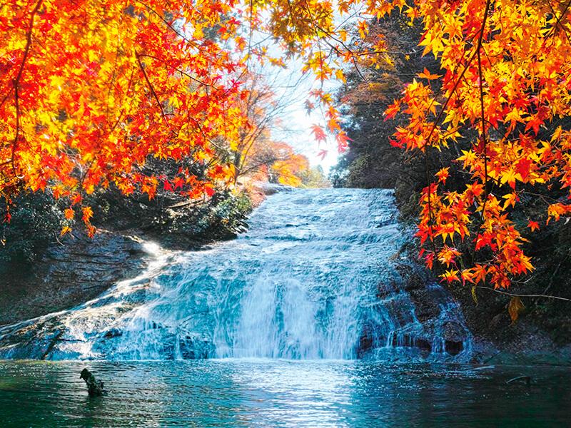 養老渓谷 紅葉の粟又の滝
