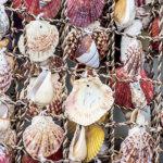 ハワイのロコガールに大人気!キュンとしちゃう可愛さの貝殻アクセサリー「サンライズシェル」