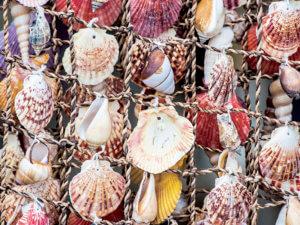 ハワイの貝殻