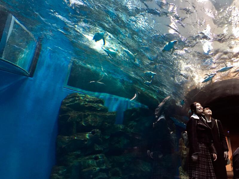 しものせき水族館海響館。左から林田岬優、宮田聡子 ©TBS