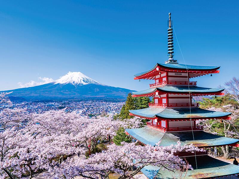 雪帽子の富士山と五重塔、桜のコラボ