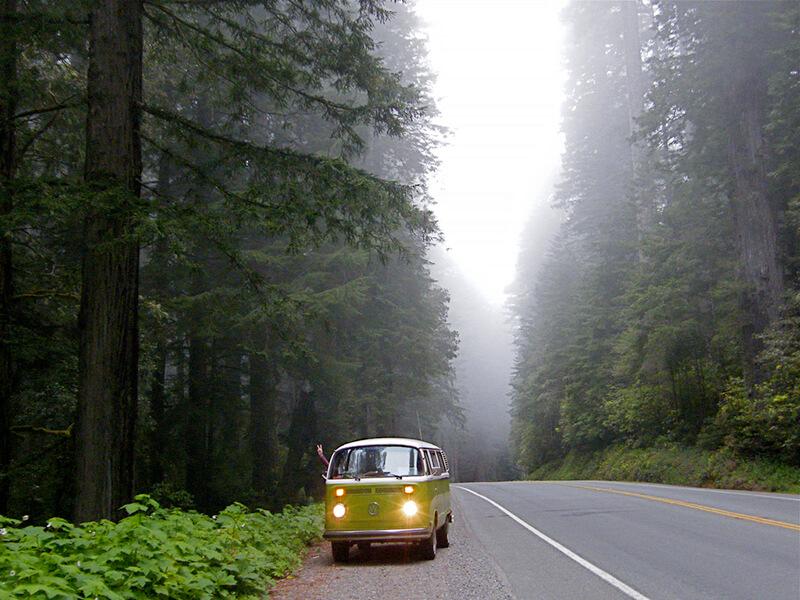 レッドウッド国立公園を行く車