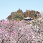水戸の梅まつりに合わせて行きたい♪お魚ランチと絶景花畑を楽しめる初春の茨城・週末トリップ