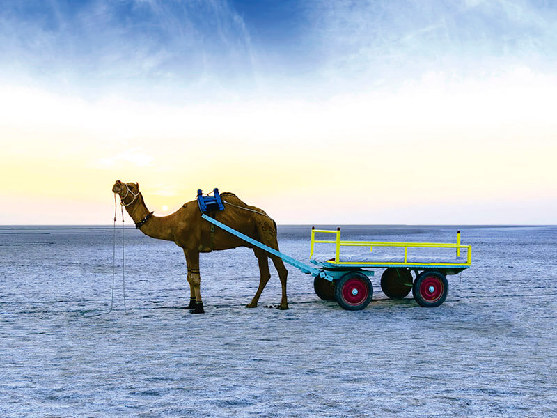 塩砂漠のラクダ