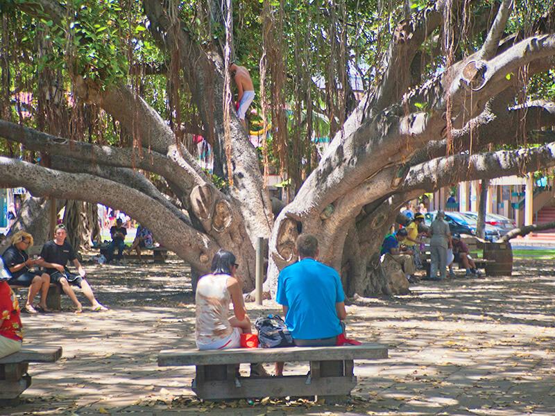 ラハイナ バニアンツリー