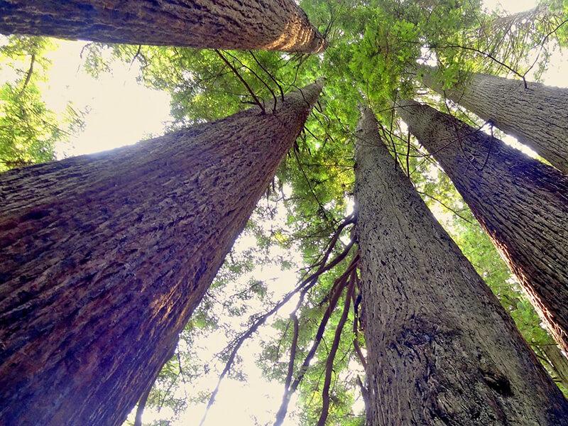 レッドウッド国立公園