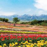 春にオススメのお出かけスポット♪色とりどりの花が咲き誇る栃木県「那須フラワーワールド」