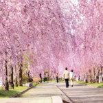 福島県喜多方市の桜スポット「日中線記念自転車歩行者道」がキレイすぎる!